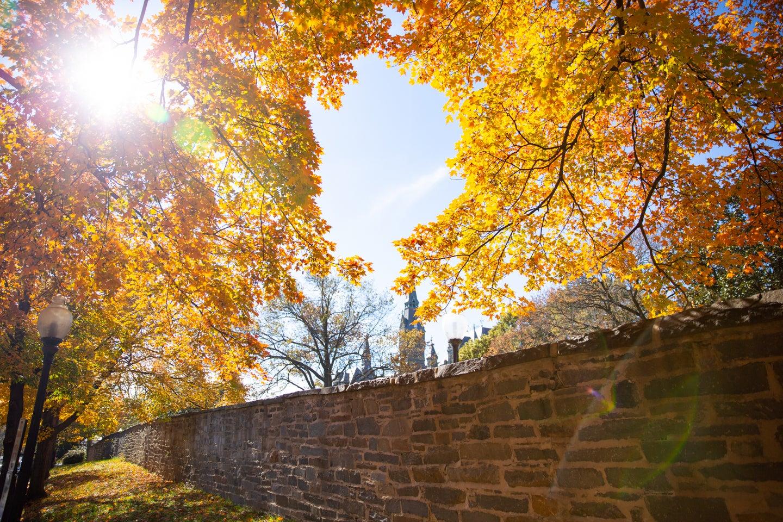Autumn foliage frames the sky on campus