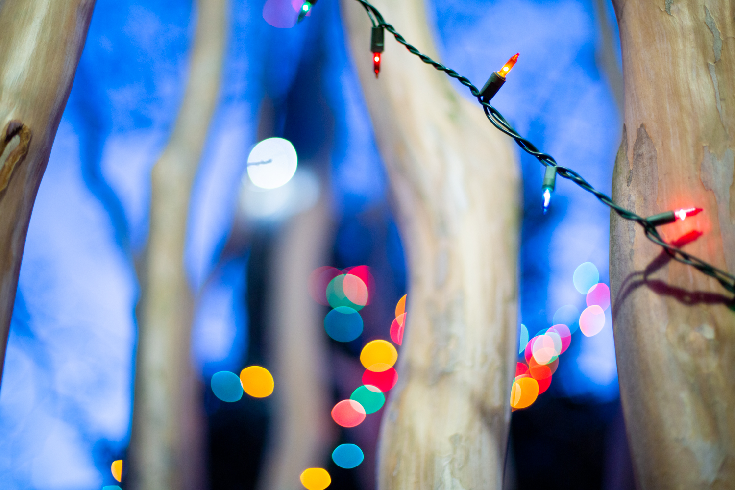 Holiday lights hang from a tree.