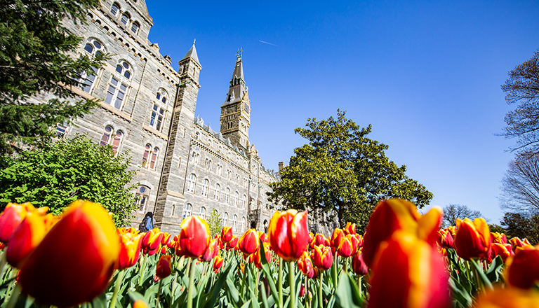 Healy Hall with tulips