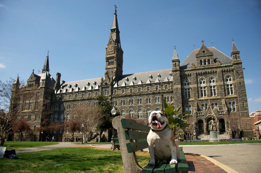 Jack the bulldog on campus