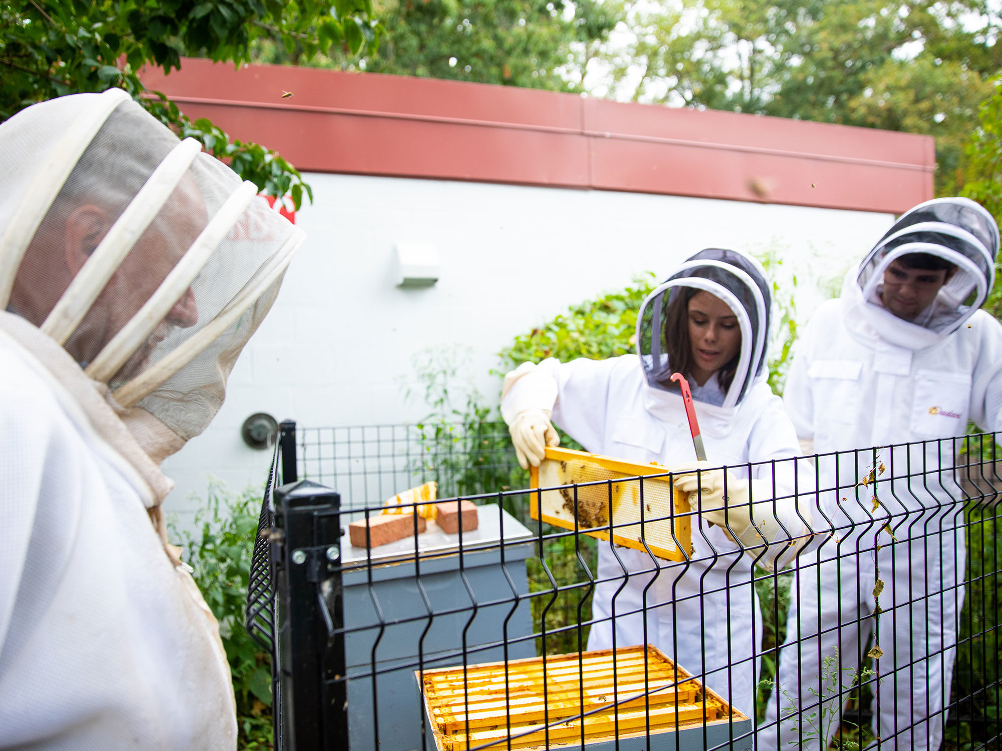 Students and professor work together at bee hives