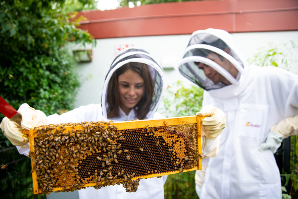 Students Allyse Smith and Billy Maguire wearing bee suits, examine a tray of honey bees