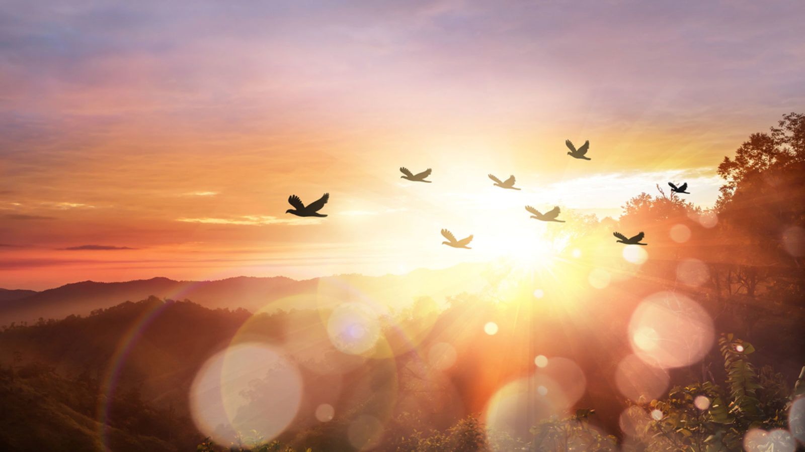 Birds flying in the sky with the sun shining in the background.