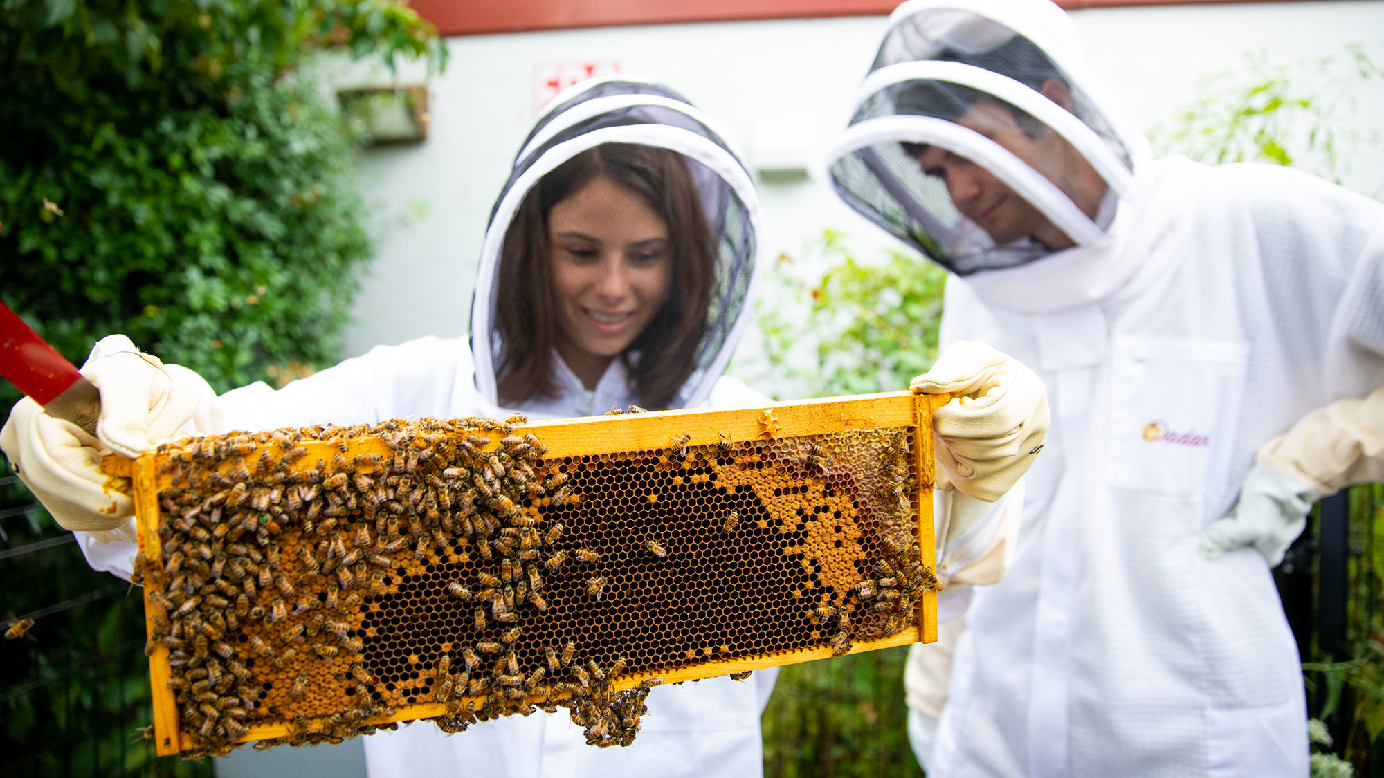 Two students hold a hive filled with bees while wearing protective suits.