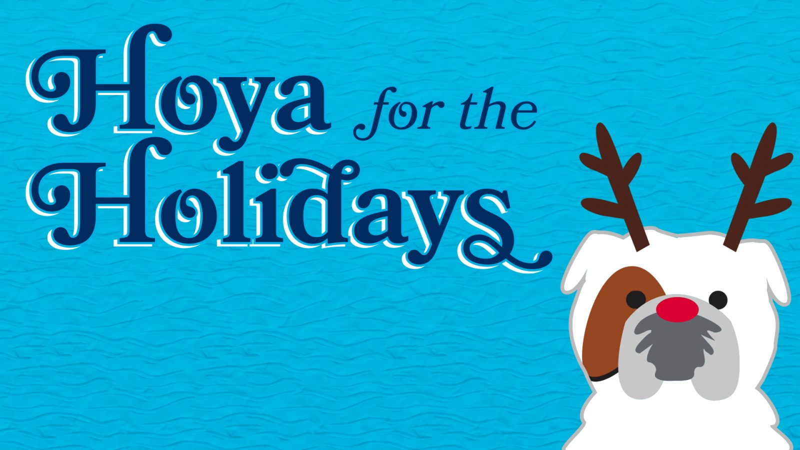 Graphic with Jack the Bullbog wearing reindeer antlers with a message reading Hoya for the Holidays.