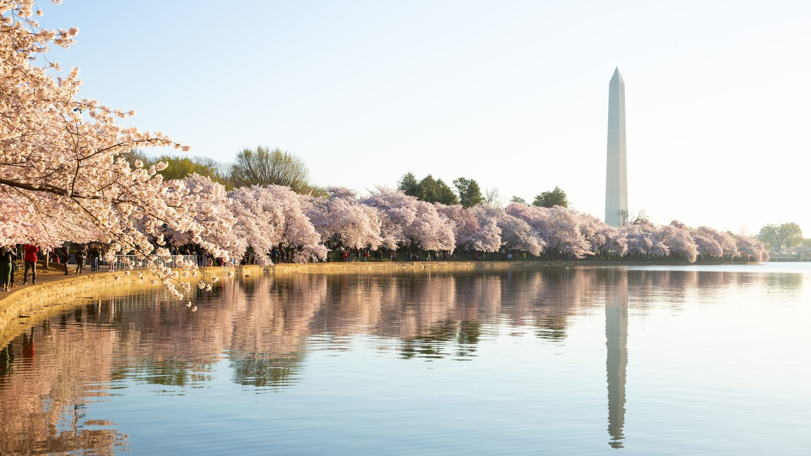Cherry blossoms and Washington Monument line the water