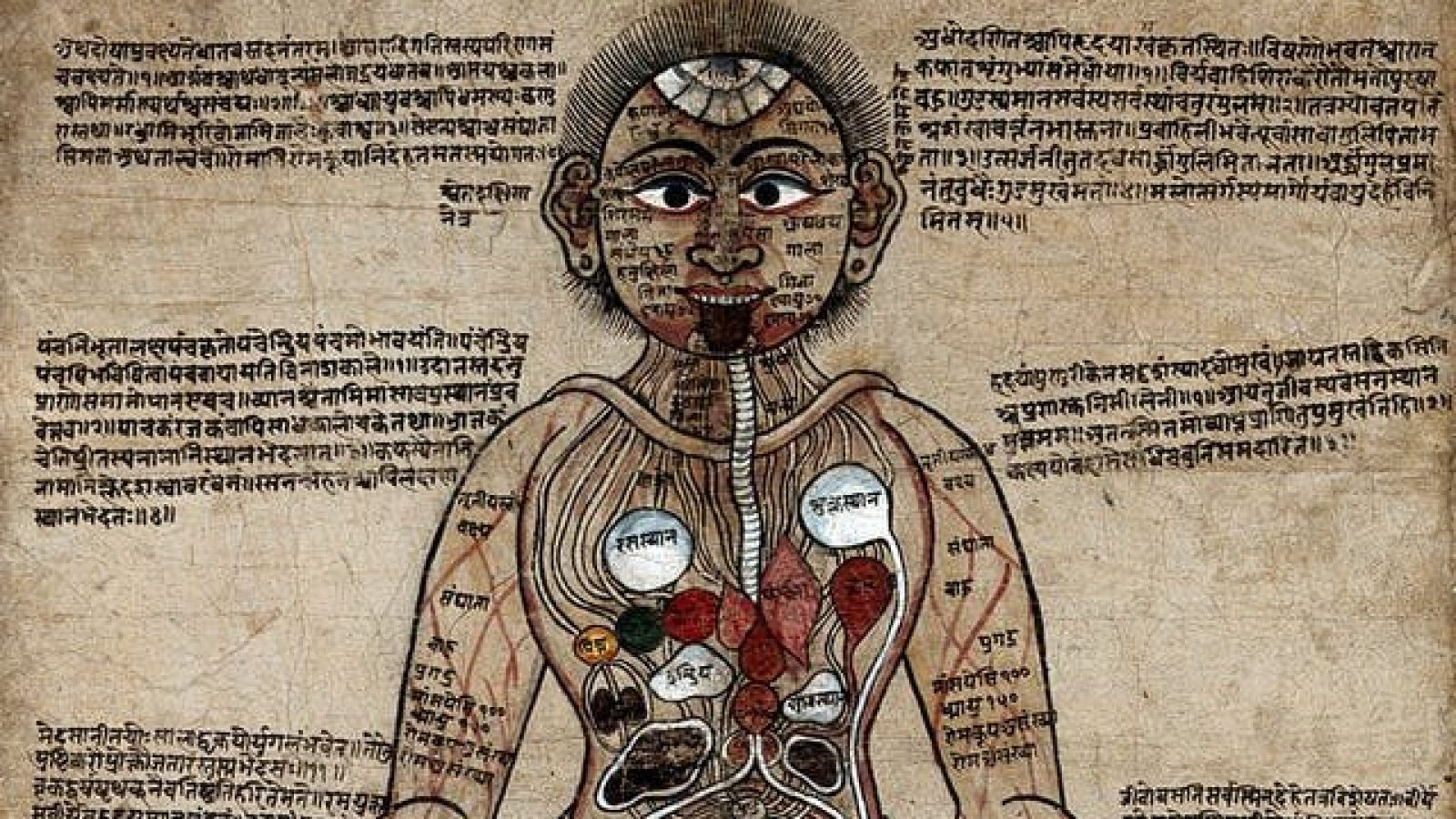 Image of Ayurvedic Man, a gouache with pen and ink painting, c.1800.
