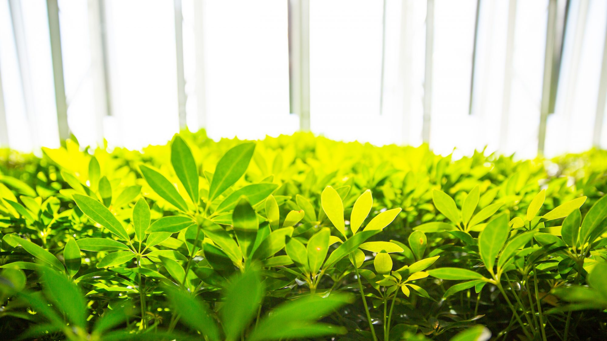 Green well growing up towards a window