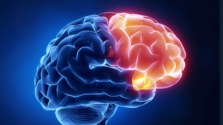 Illustration of brain's frontal lobe lit up in red and blue