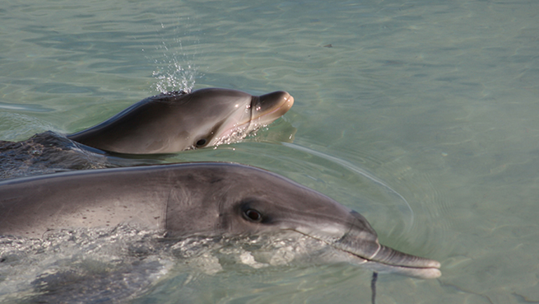 mother and infant dolphin in the water