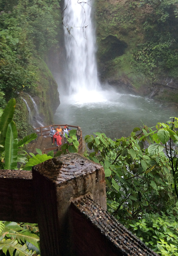 a group of students observe a waterfall in a rainforest.