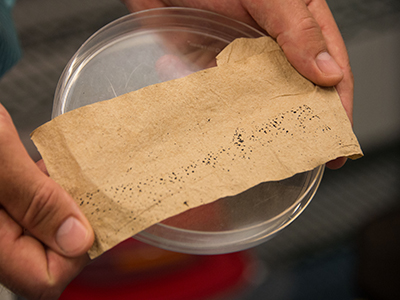 Hands holding a petri dish with a cloth containing mosquito larvae