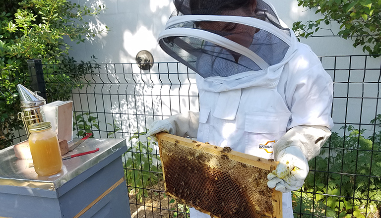 A woman in a protective suit holds screen with bees on it with a jar of honey near by