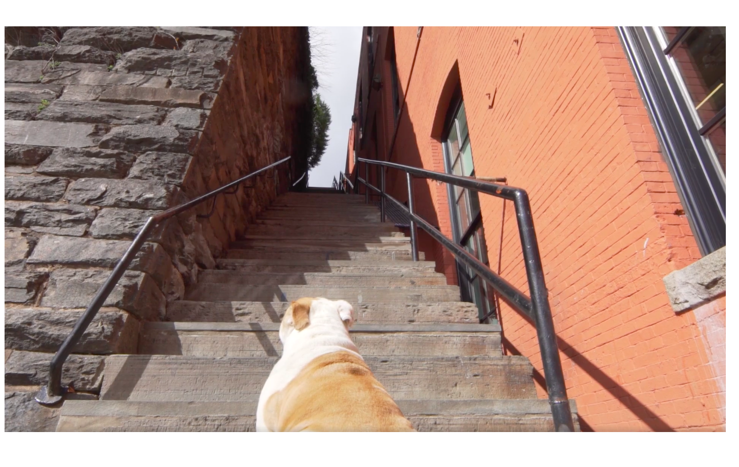 Jack the Bulldog sits at the bottom of the Exorcist steps
