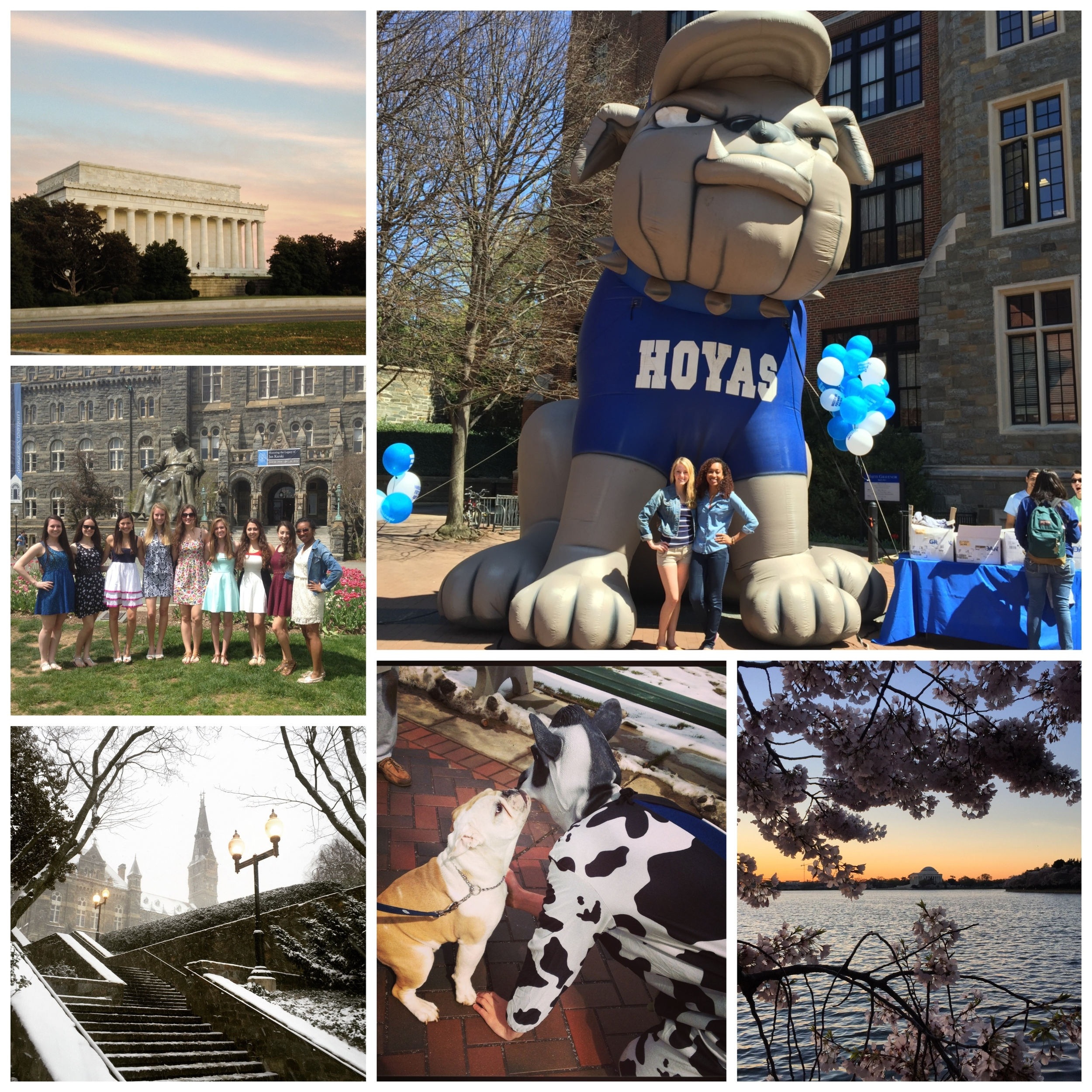 A collage of photos of campus, Jack the bulldog, the tidal basin, students grouped together on the lawn, the Lincoln monument